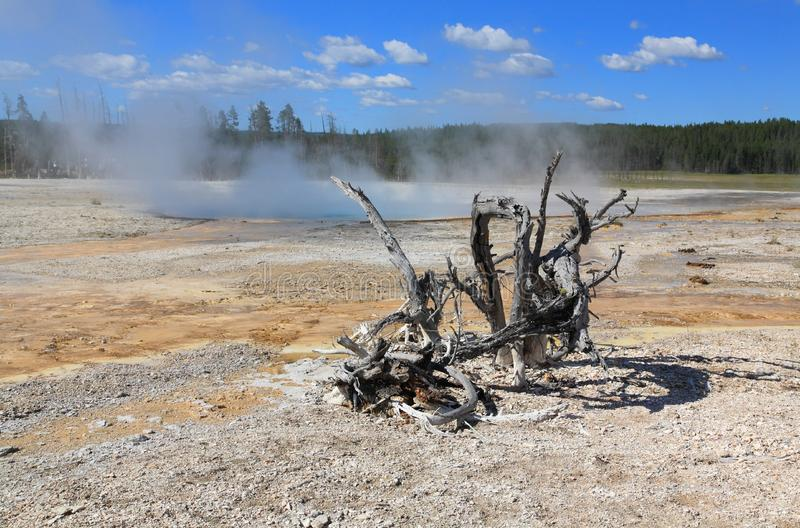 Download Lower Geyser Basin In Yellowstone Stock Photo - Image: 6169036