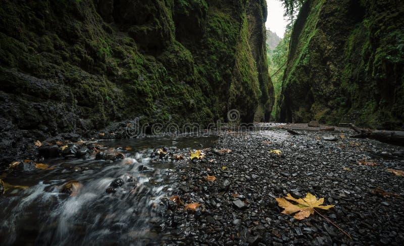 Oneonta Gorge Wallpaper