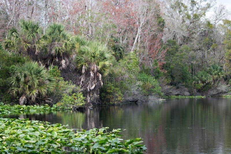 Download Lower Wekiva River State Park, Florida, USA Stock Image - Image: 36958207