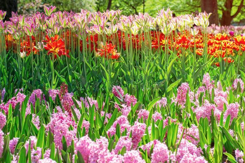 Lowerbed con i fiori di fioritura della molla fotografia stock libera da diritti
