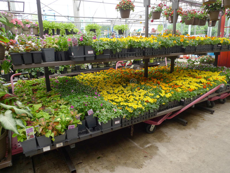 Large Flower Pots Lowes: Lowes Garden Center Flowers In Spring Editorial Stock