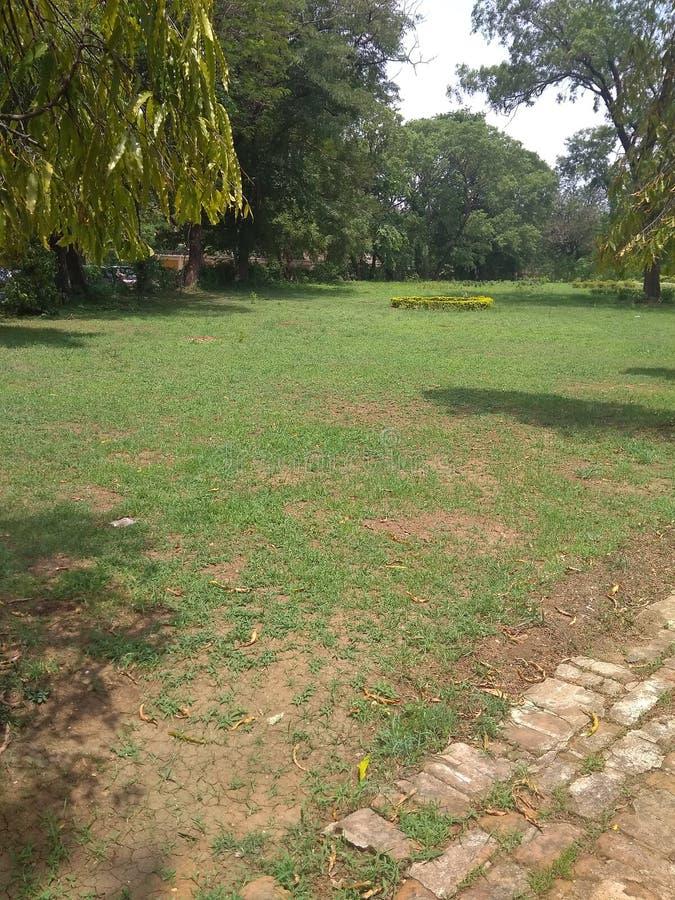 Lown зеленой травы в саде стоковые изображения