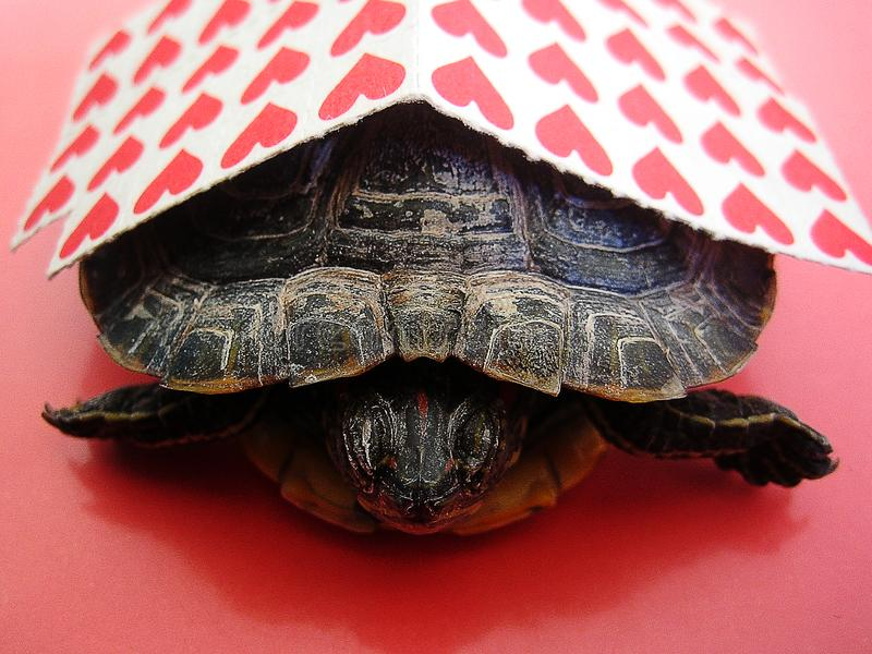 Lsd Small red stick papers with a turtle background macro wallpaper fine prints royalty free stock photos