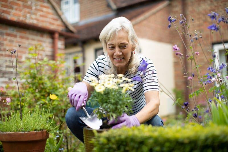 ?ltere Frau Potting-Anlage im Garten zu Hause lizenzfreies stockbild