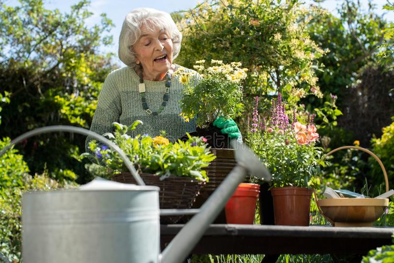 ?ltere Frau Potting-Anlage im Garten zu Hause lizenzfreie stockfotografie