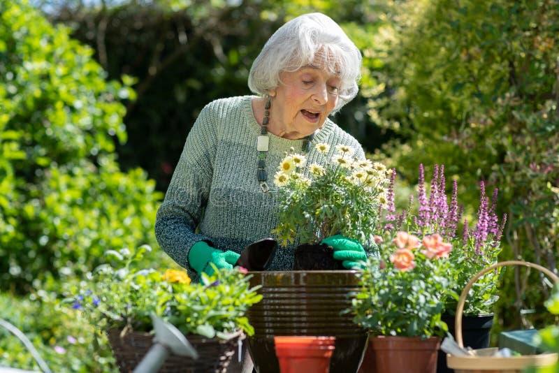 ?ltere Frau Potting-Anlage im Garten zu Hause lizenzfreie stockbilder