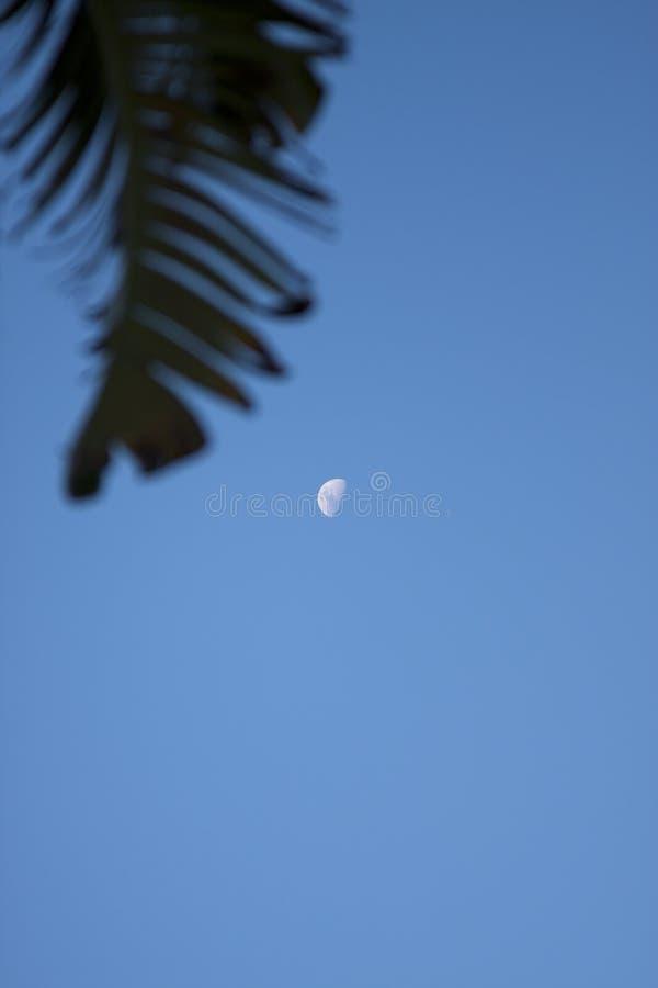 A lua é o céu imagem de stock
