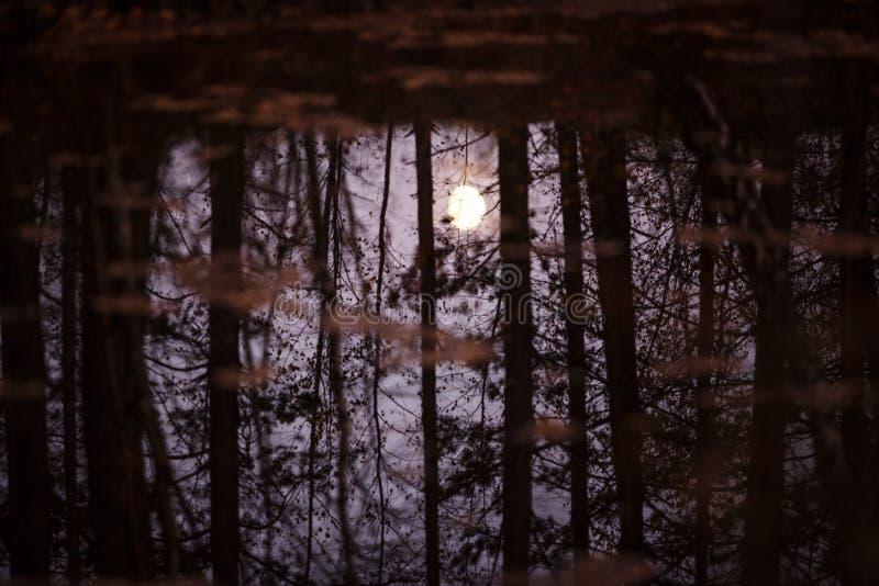 A lua é refletida na água através dos troncos e dos ramos das árvores imagem de stock royalty free