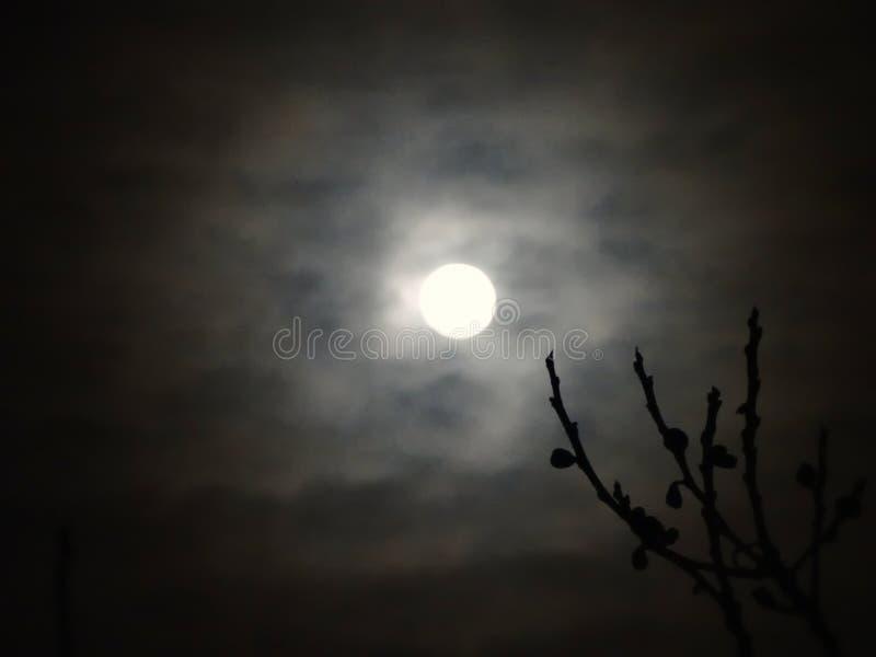 Lua através das nuvens imagens de stock royalty free