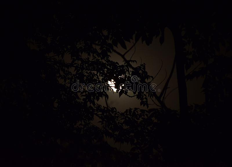 Lua cheia com luar atrás da árvore fotos de stock