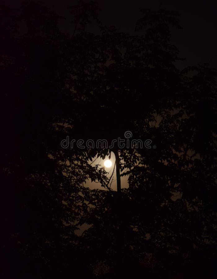 Lua cheia com luar atrás da árvore foto de stock royalty free