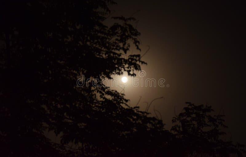 Lua cheia com luar atrás da árvore imagens de stock royalty free