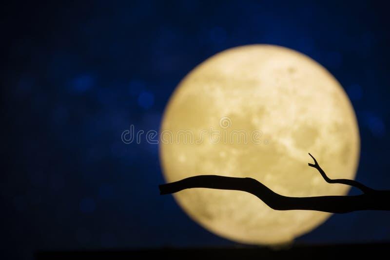 Lua cheia na noite escura imagem de stock royalty free