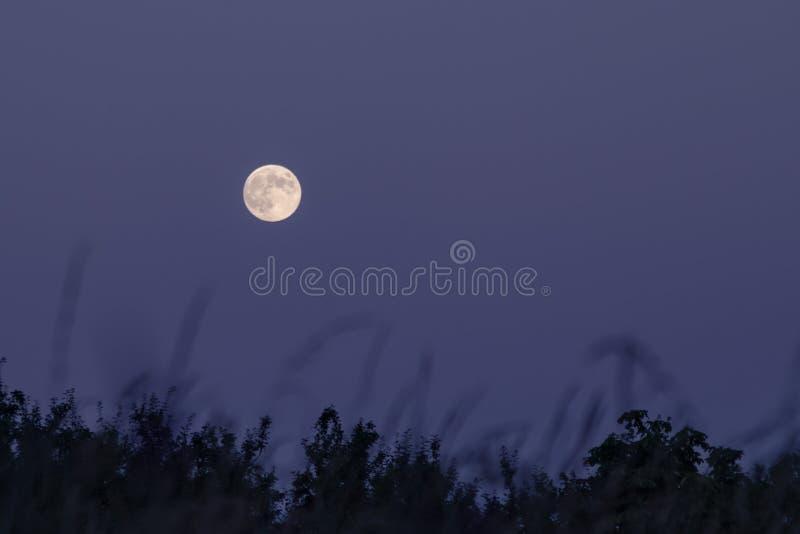 Lua cheia no céu roxo fotografia de stock royalty free