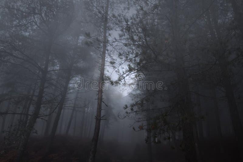 Lua cheia que aumenta em madeiras de um myst imagens de stock royalty free