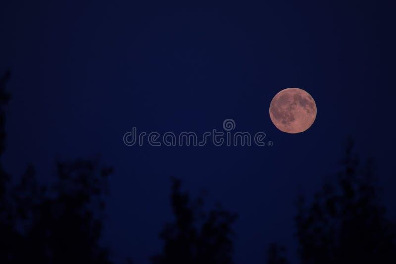 Lua cheia que incandesce vermelha fotografia de stock royalty free