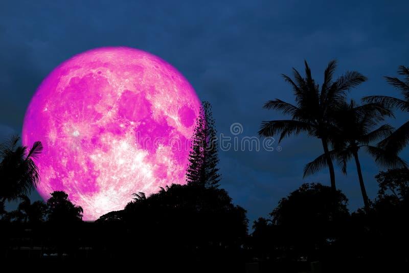 Lua cor-de-rosa completa sobre a palma de coco da silhueta na floresta ilustração stock