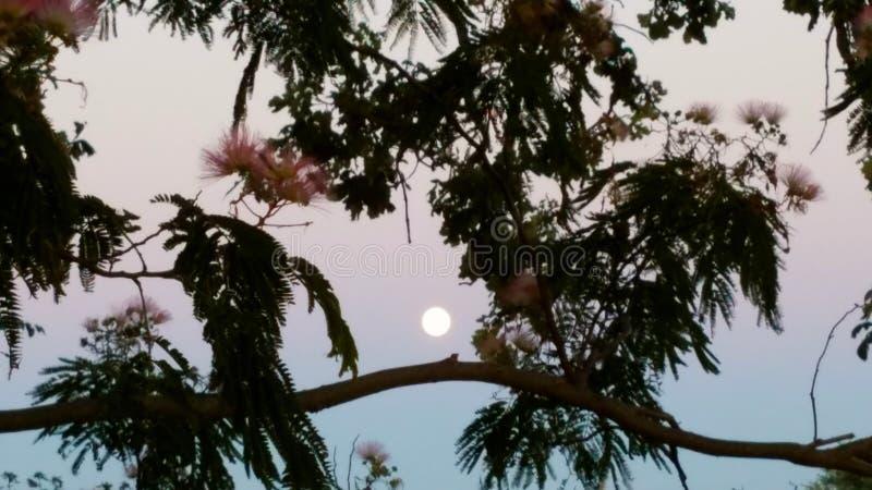 Lua crepuscular imagens de stock