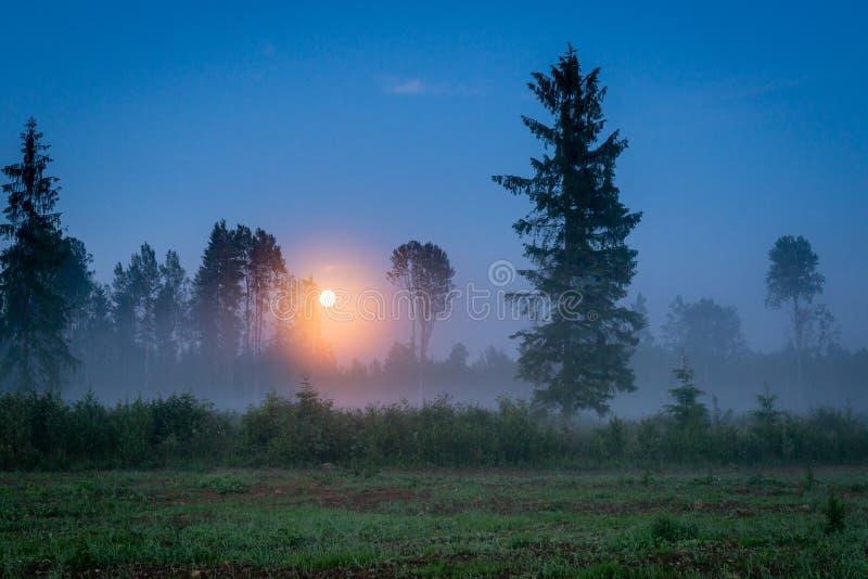 Lua de aumentação sobre uma floresta nevoenta no crepúsculo foto de stock royalty free