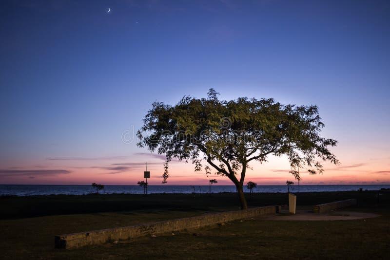 Lua do crepúsculo da árvore imagens de stock