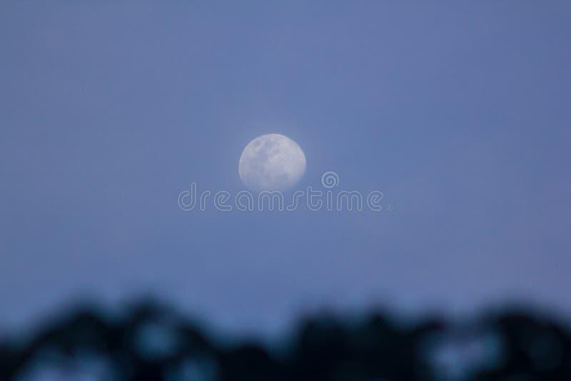 A lua do dia acima da árvore alta foto de stock