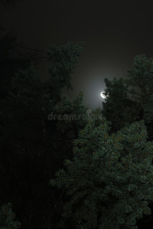 Lua e árvores imagem de stock