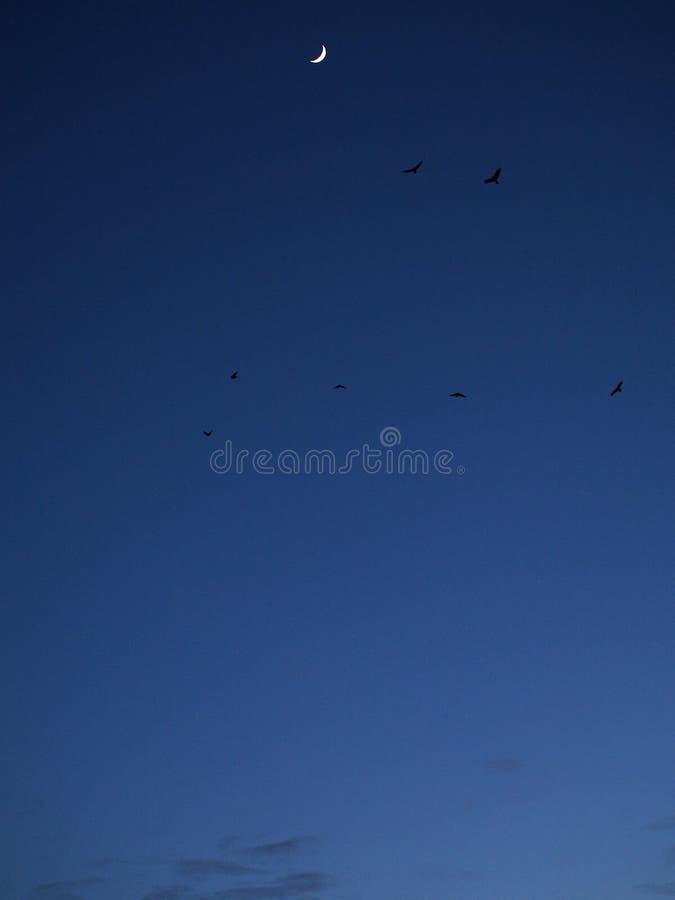 Lua e pássaros no céu azul foto de stock