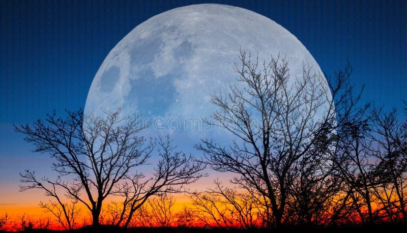 Lua enorme que aumenta sobre as árvores no crepúsculo imagens de stock