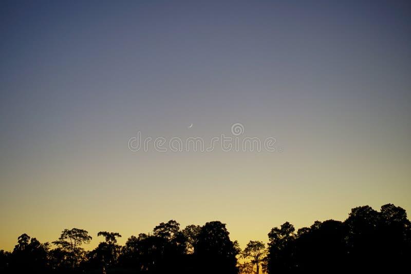 Lua nova bonita no por do sol e na árvore fotos de stock