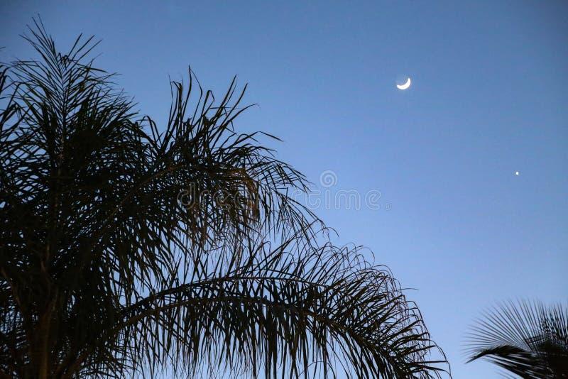 Lua sobre palmeiras fotos de stock
