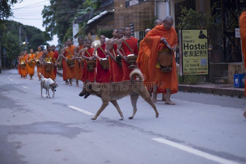 Luang Prabang, il Laos, cani e monaci nelle elemosine che danno cerimonia, fotografie stock