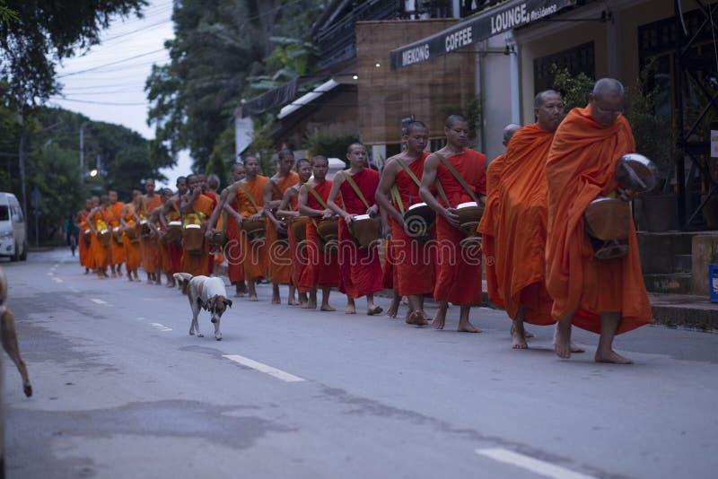 Luang Prabang, il Laos, monaci e cani nelle elemosine che danno cerimonia, immagine stock