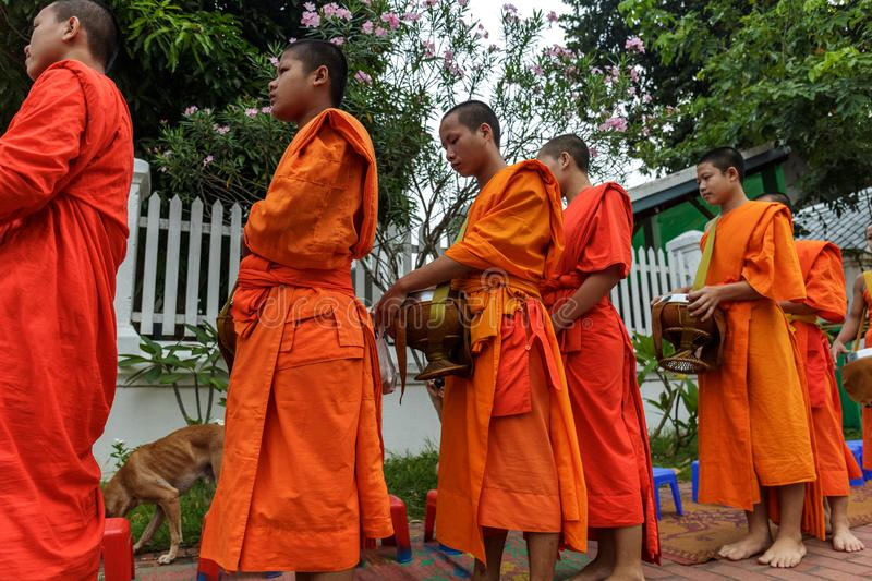 Buddhist monks collect alms in Luang Prabang, Laos royalty free stock image