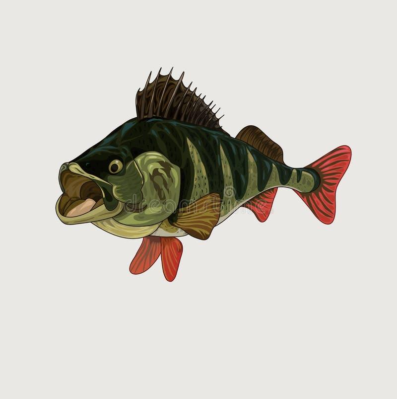 Lubina rayada con el ejemplo abierto del vector de la boca libre illustration