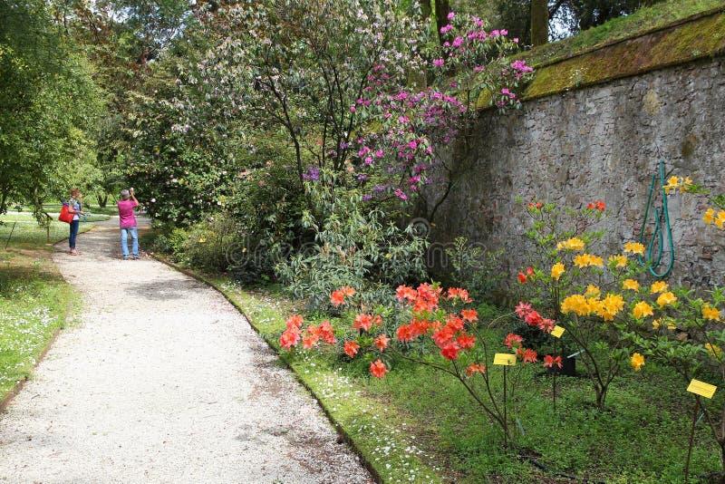 Lucca botanisk trädgård royaltyfri foto