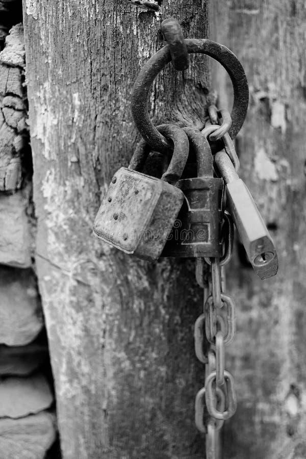 Lucchetti corrosi annata con la catena su un fondo antico del portone in B&W Rusty Padlocks anziano su una porta di legno immagini stock