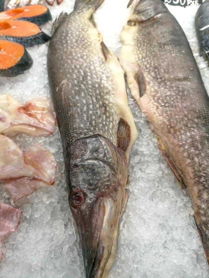 Luccio del pesce nel ghiaccio sullo scaffale del mercato fotografia stock
