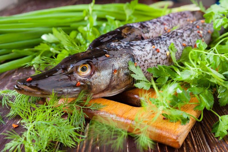 Luccio fresco su un tagliere ed erbe fresche, pesce fotografia stock