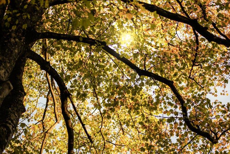 Luce atmosferica in foglie di autunno fotografie stock libere da diritti