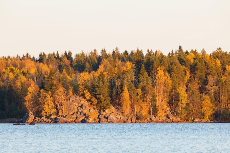 Luce autunnale di tramonto della riva del lago della foresta fotografie stock libere da diritti