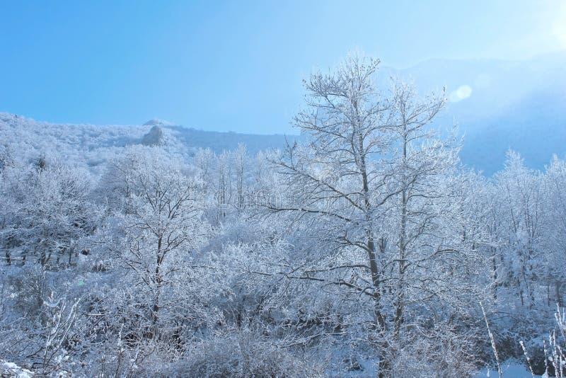 Luce degli alberi, della neve e del sole immagine stock