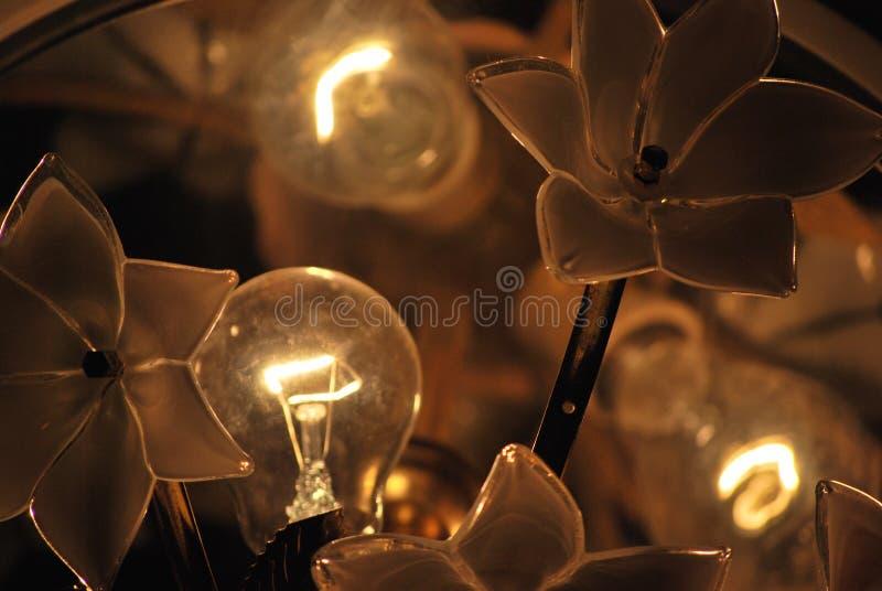luce dei fiori fotografie stock libere da diritti