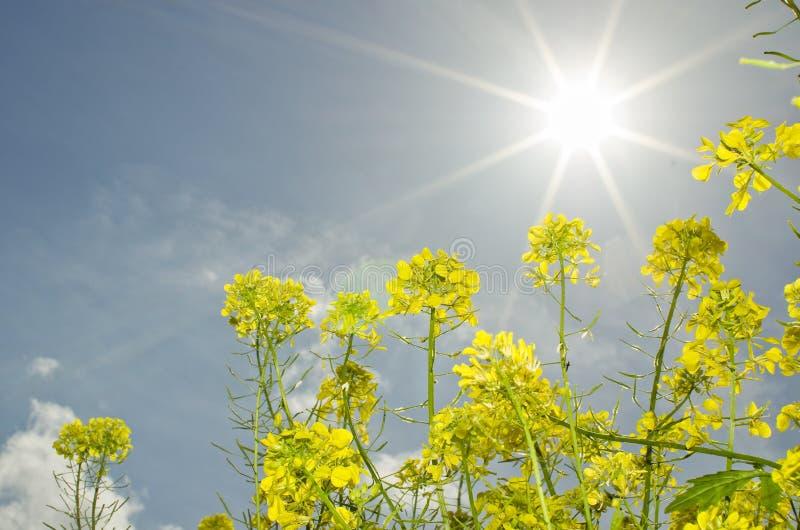 Luce del sole della primavera fotografie stock libere da diritti