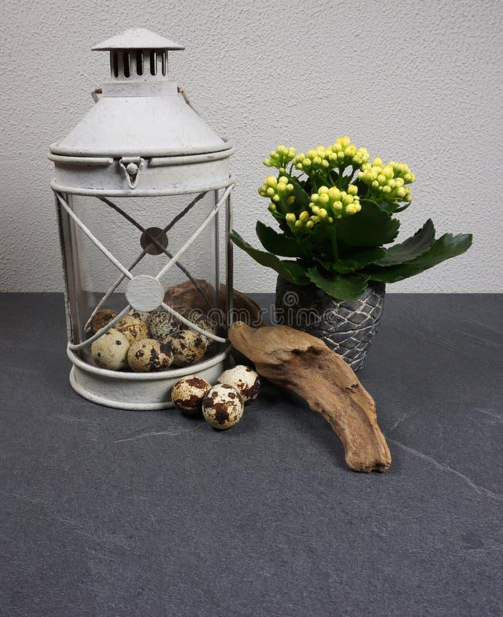 Luce del vento con la pianta d'appartamento del kalanchoe con le uova di Pasqua ed il legname galleggiante a fondo grigio fotografie stock libere da diritti
