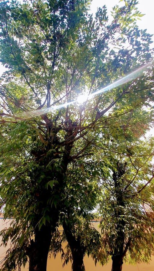 Luce dell'albero fotografia stock