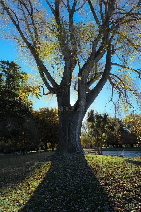 Luce dell'orlo dietro l'albero fotografia stock libera da diritti
