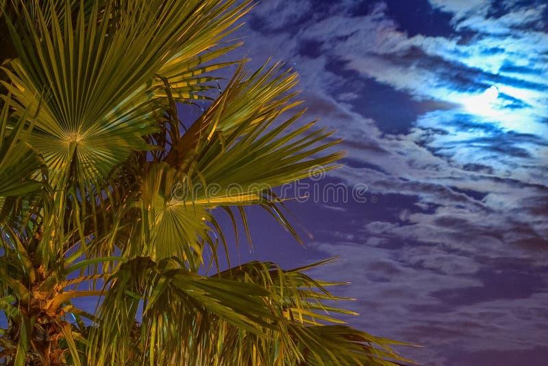 Luce della luna dietro la palma fotografia stock