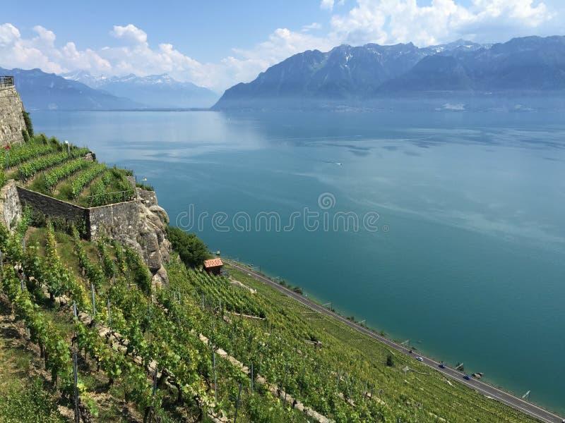 Luce della primavera, Lavaux, Unesco, vigne immagini stock libere da diritti