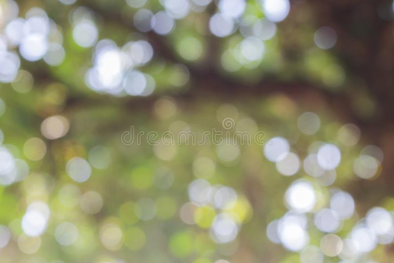 Luce di Bokeh sul fondo verde di colore pastello immagini stock