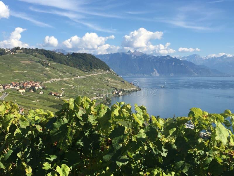 Luce di caduta, Lavaux, Unesco, vigne fotografie stock